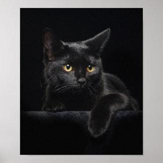 Poster del gato negro póster