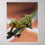 poster del gecko