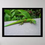 Poster del Gecko del día del polvo de oro
