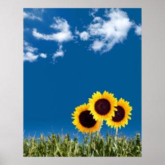 Poster del girasol del verano