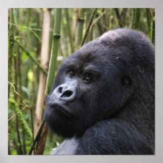 Poster del gorila de la tierra baja