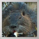 Poster del hábitat del castor
