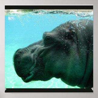 Poster del hipopótamo de la natación