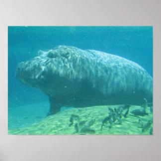 Poster del Hippopotamus