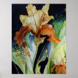 Poster del iris anaranjado y amarillo