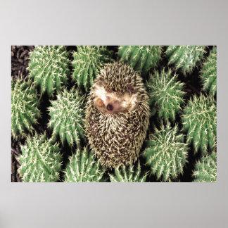 Poster del jardín del cactus