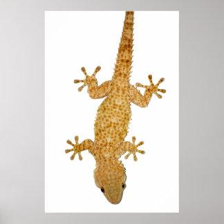 poster del lagarto del gecko