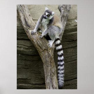 Poster del Lemur