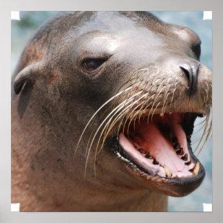 Poster del león marino de California