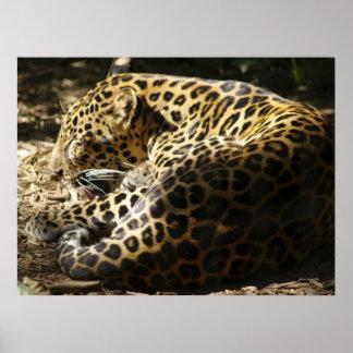 Poster del leopardo