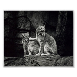 Poster del lince