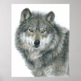 """Poster del lobo de los """"ojos frecuentados"""" del art"""