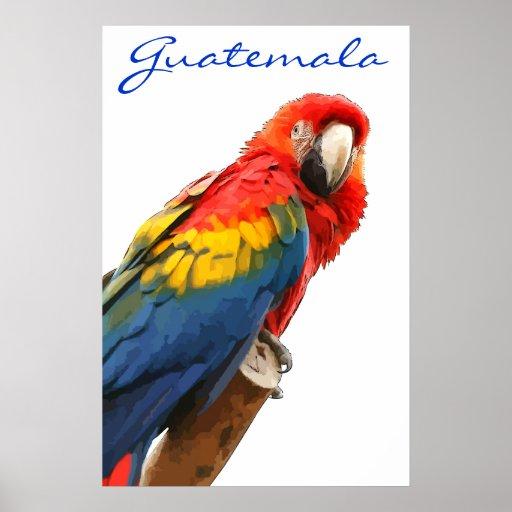 Poster del Macaw del escarlata de Guatemala