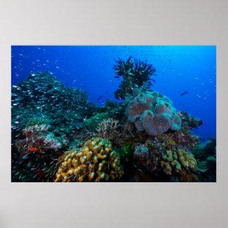 Poster del mar de coral