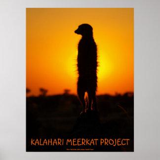 Poster del meerkat del resplandor de oro