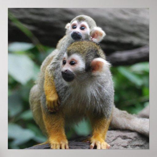Poster del mono de ardilla del bebé