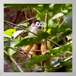 Poster del mono de ardilla póster