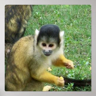 Poster del mono de Squirrrel
