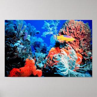 Poster del mundo del arrecife de coral