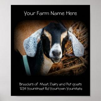 Poster del negocio del criador de la cabra póster