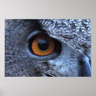 Poster del ojo del búho de Eagle