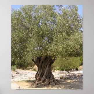 Poster del olivo de Israel