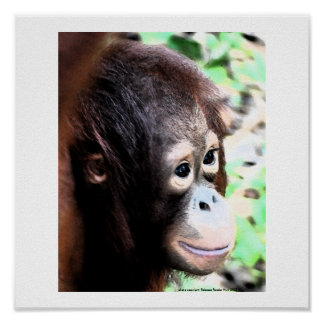 Poster del orangután: El árbol original Huggers