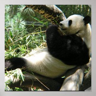 Poster del oso de panda gigante