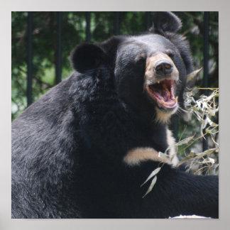 Poster del oso el gruñir