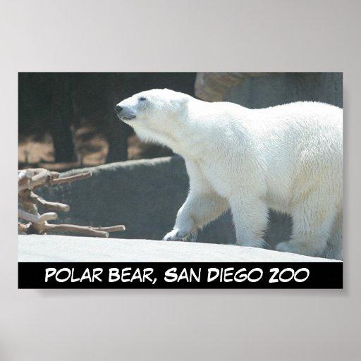 Poster del oso polar