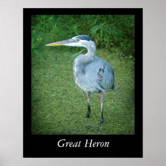 Poster del pájaro de agua de la Florida