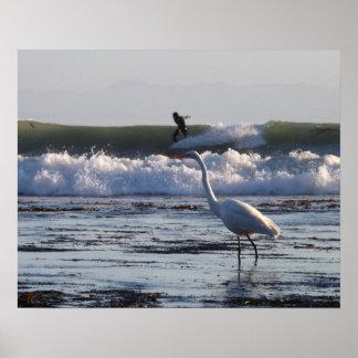 Poster del pájaro de Surfin