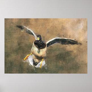 Poster del pato del vuelo póster
