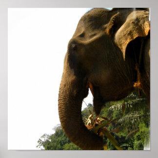 Poster del perfil del elefante