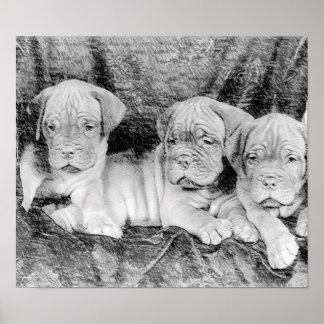 Poster del perrito de Dogue de bordeaux