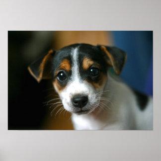 Poster del perrito de Jack Russell Terrier