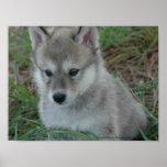 Poster del perrito de lobo