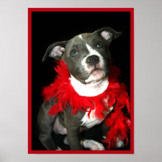 Poster del perrito de Pitbull