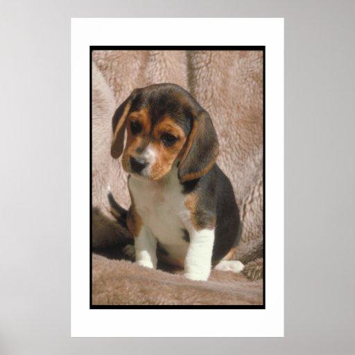 Poster del perrito del beagle