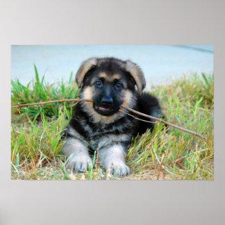 Poster del perrito del pastor alemán
