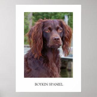 Poster del perro de aguas de Boykin