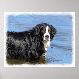 Poster del perro de montaña de Bernese