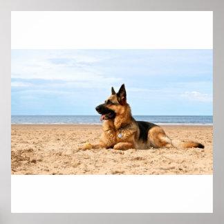 Poster del perro de pastor alemán