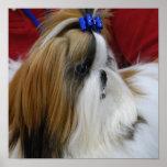 Poster del perro de Shih Tzu