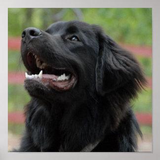 Poster del perro de Terranova