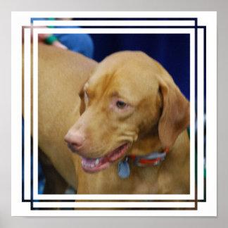 Poster del perro de Vizsla