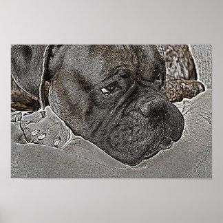 Poster del perro del boxeador