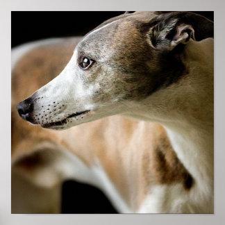 Poster del perro del galgo