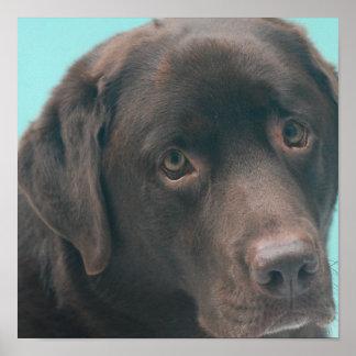 Poster del perro del laboratorio del chocolate