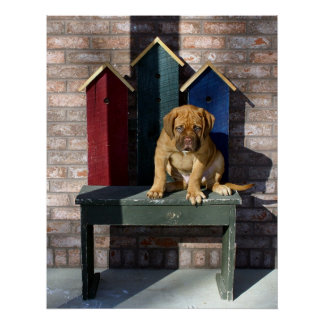 Poster del perro guardián